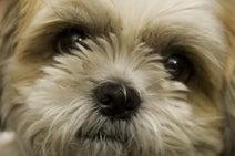 犬には嘘つきを見抜く能力がある!―京都大研究