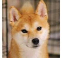 保護犬たちの「いぬ親」募集中