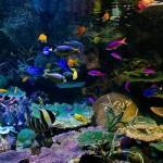 味気のない暮らしのパートナー、色彩豊かな美しい熱帯魚