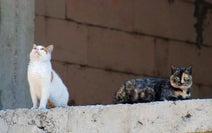 「猫を数十匹も飼うお向かい...大量の糞尿に大迷惑、苦情にも聞く耳持たず」(埼玉県・20代女性)