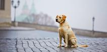要注意! 飼い犬にリードをつけないのは、条例違反!