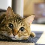飼う前に知っておきたい「ペットを飼うなら気をつけたいこと」