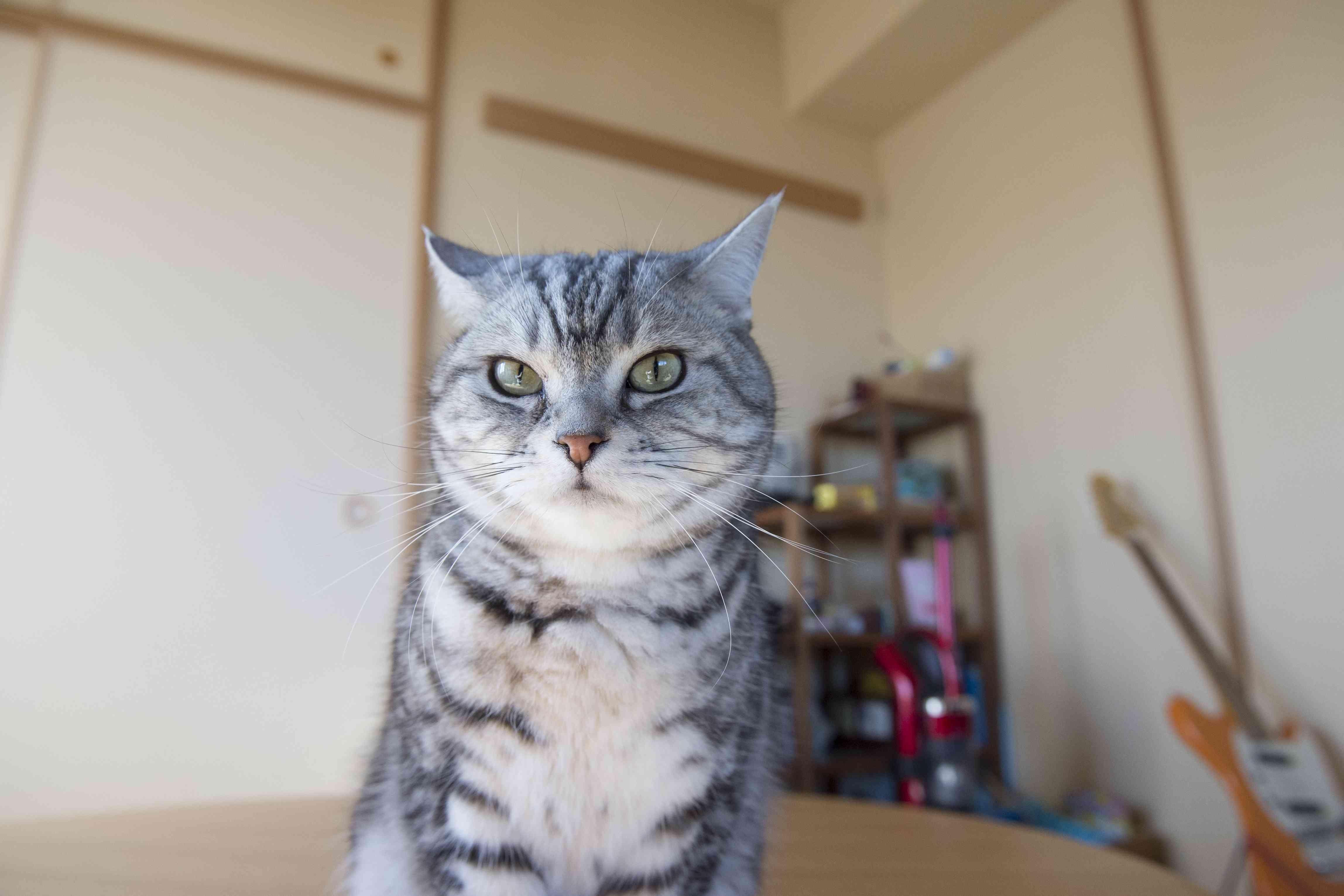 「角田光代 猫」の画像検索結果