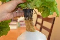 自宅で野菜を作ろう!壁掛け水耕栽培キット『Herbert』がすごい