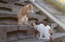 必死すぎるネコ、必死に京都へ!− 沖昌之さんによるネコ写真展「写真集重版出来記念個展 in KYOTO」、11月23日スタート