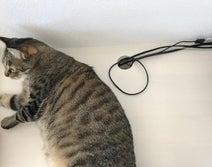 愛玩動物飼養管理士が教える!猫の感電死を防ぐコード収納術