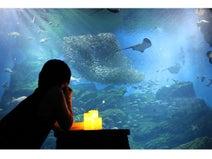 ストイックに水族館を楽しむ!「おひとりさまナイト水族館」