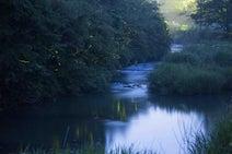 【九州のホタル名所】無数のホタルの競演に息を呑む、大分・九重の名瀑「龍門の滝」