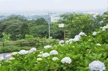 【九州のアジサイ名所】若松の絶景×アジサイが美しい北九州市「高塔山公園」