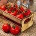 家庭菜園のトマトの病気、原因と対処法