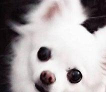 高橋英樹、愛犬・チロコが膵炎で入院「あの時のように元気になっておくれ!」