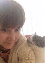 """鈴木蘭々、""""ベタつきが凄い""""飼い猫の写真を公開「何が起こっているのだい?」"""