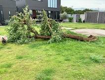 坂上忍、台風の影響で自宅の庭の木が倒れる「根元から、ゴッソリ持っていかれて」