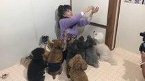 小柳ルミ子、犬に囲まれる動画を公開「犬の番組に出た~~い」