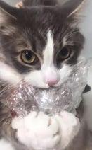猫が黒毛和牛泥棒する動画が話題に「これが本当の泥棒ネコ」「両手でしっかり持ってる」