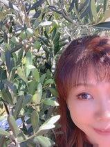 """小川菜摘、自宅でオリーブ豊作も""""残念""""なこと「あげる事にしました」"""