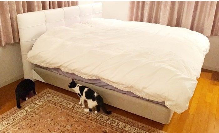 藤あや子、フルオーダーした新しいベッドを公開「3ヶ月かかりました」