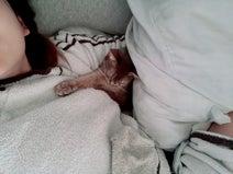 あいのり・桃、愛猫の健康診断に約15万円「専門の大きな病院に連れて行くことに…」