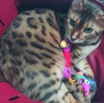 叶美香『バーキン』でくつろぐ愛猫に大慌て「ダメって言ってるのにーー!」