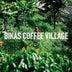 コーヒーの木を自分で 持続可能な植樹プロジェクト