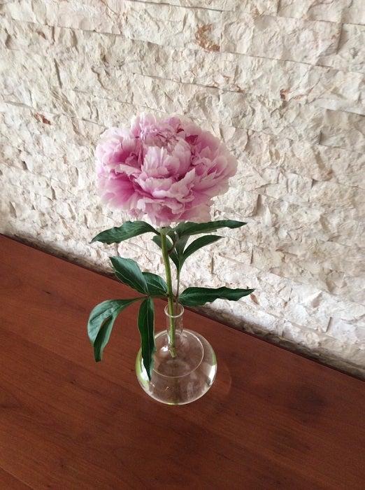 ピンク・レディー増田惠子、美容のために毎日していること「生きている証拠」