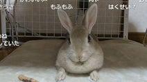 飼い主のおやつの呼びかけにぴょんぴょん応えるウサギさん 他の言葉で呼んでも無反応な様子に「もう、おやつって名前でいいんじゃない?」