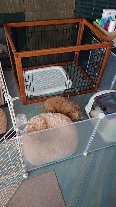 秋野暢子、愛犬の避妊手術を決めた理由を明かす「色々考え方ありますが」