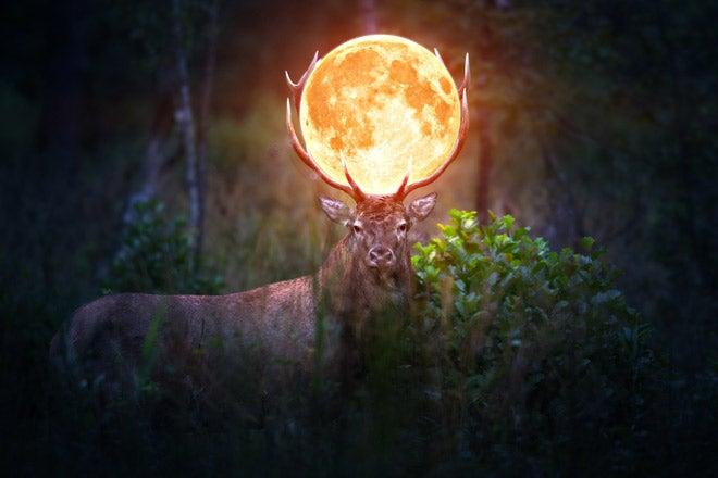 7月24日の満月は「バックムーン」満月の呼び名の意味とおまじない