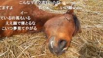 スヤァ… 熟睡している馬の表情がオッサンみたいで可愛い! ほんのり癒やされる寝顔に「野生を忘れてる」「女房とおなじだ」