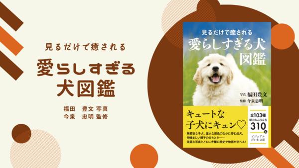 キュンキュンがとまらない!『見るだけで癒される 愛らしすぎる犬図鑑』が発売