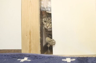 猫は本当にヒゲのサイズなら通り抜けられるのか? 呼べば来る猫ちゃんと実験してみた