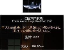 川の肉食魚