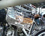 籠の中の猫。