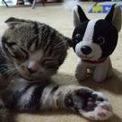 ブルちゃんの「Cat Cafe きまぐれねこ」レポート1の記事より
