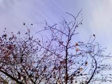 桜の木の下~育児中です♪~-08-12-04_001.jpg