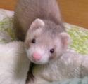 blog-profile miyako