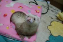 まったり~な寝袋①