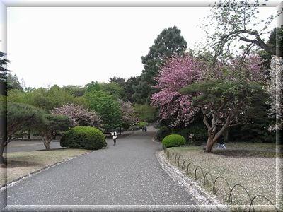新宿御苑9