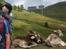 牛とボーズ