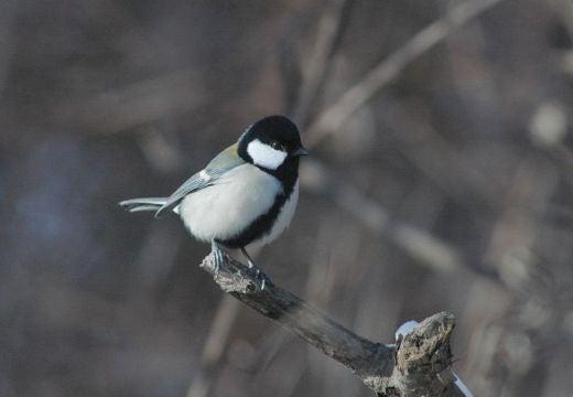 北海道の野生動植物写真