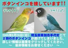 Blue Bajou-わが家の愛鳥記録-