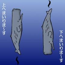 マッコウクジラの潜り方