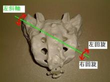 仙骨(左斜軸)