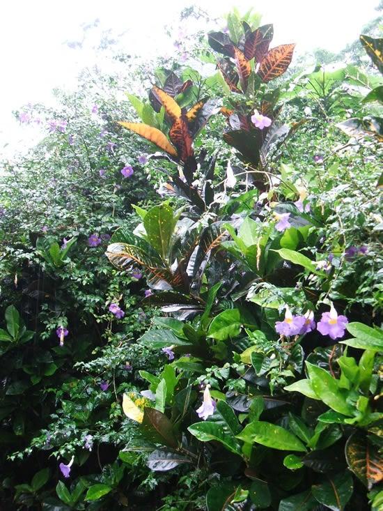 シーサー園 花