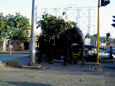 象の信号待ち