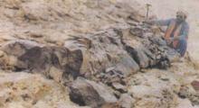 サウジアラビアの巨大キノコ化石