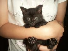 中学生にっき!招き猫 ビビに夢中-肉球はやはり黒