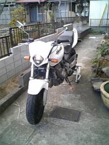 New Hornet