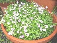 mixflowerd