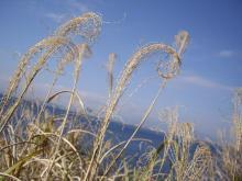 中国大連生活・観光旅行通信**-江ノ島 岩屋